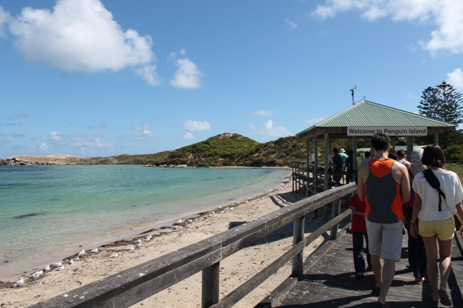 Off the ferry and walking towards the Penguin Island entrance,