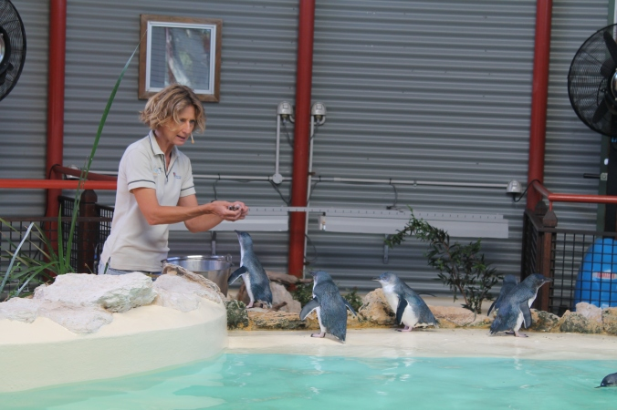 The penguin feeding activity.