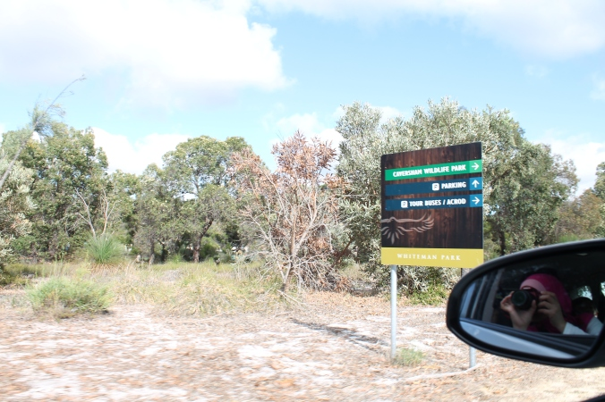 Once we enter the Whiteman Park, we had to drive masuk ke dalam lagi to reach the Caversham Wildlife Park.