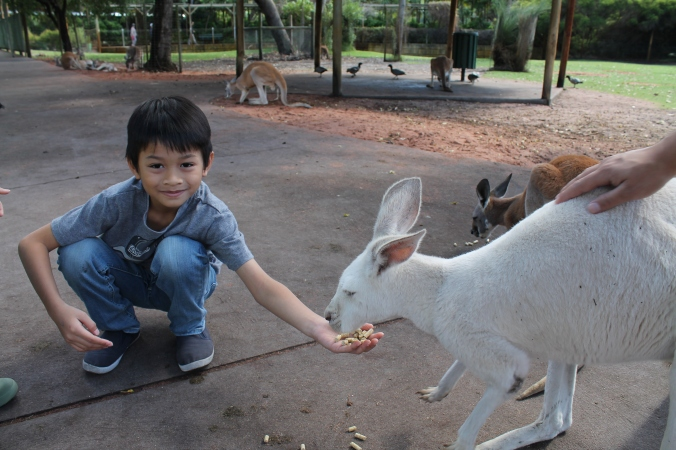 IY getting the hang of it. Suka dia when they came hopping towards him for food.