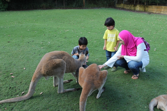It's an open space where the kangaroos roamed freely, they kept hopping towards us for food. Mulanya me and the boys cuak gak. IY siap terjerit-jerit konon terkejut. Tapi lama-lama when dah warm up, he enjoyed the experience very much.