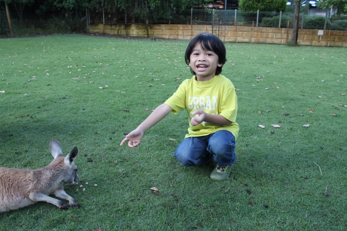 "Budak ni takut nak hukur tangan dia. Tapi tak takut nak pat the kangaroo. HE will just tabur the food on the ground and let them eat sendiri. This is Z proudly saying ""Tengok ni! Dia makan yang adik kasi ni!"""