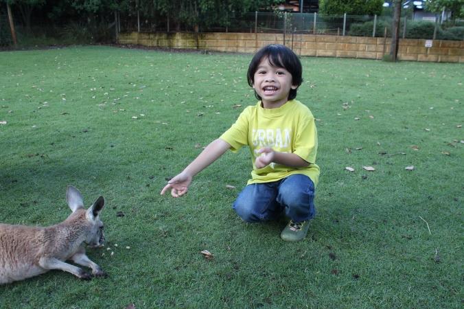 """Budak ni takut nak hukur tangan dia. Tapi tak takut nak pat the kangaroo. HE will just tabur the food on the ground and let them eat sendiri. This is Z proudly saying """"Tengok ni! Dia makan yang adik kasi ni!"""""""