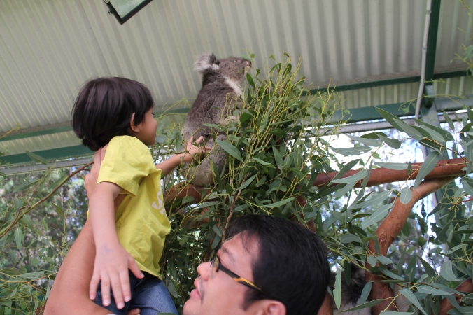 "Z loves to pat animals. dia sapu bulu koala tu and said ""comel je dia ni kan?"""