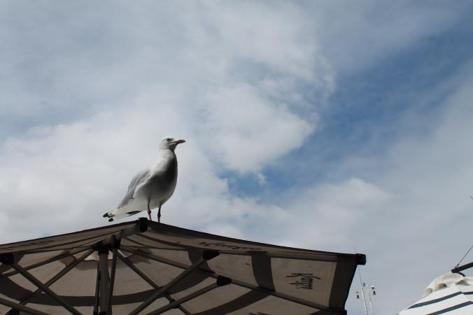 Hello bird! Want some fish?